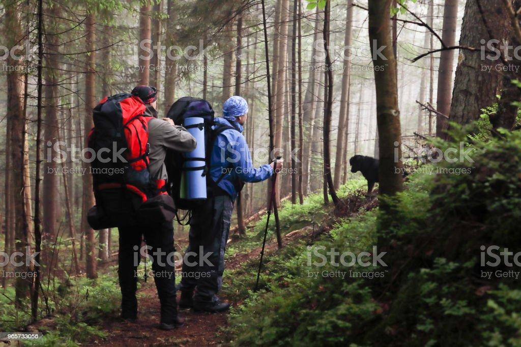 Drie mannen wandeling in het bos met rugzak voor trekking - Royalty-free Alleen mannen Stockfoto