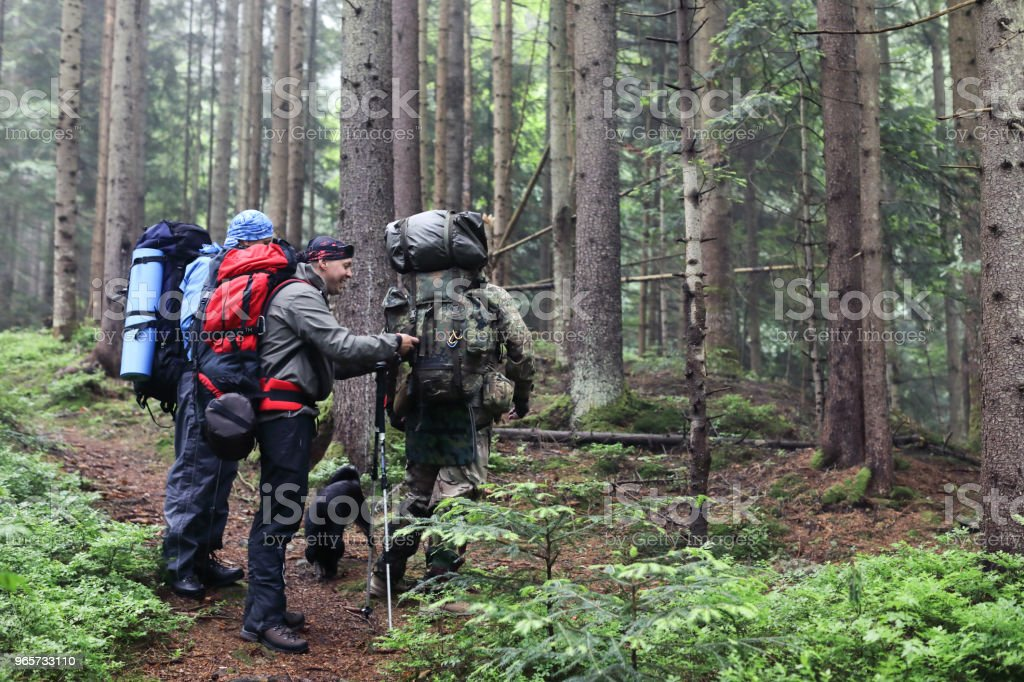 Three men hike in forest with backpack for trekking - Royalty-free Adult Stock Photo