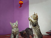 istock Three mongrel domestic kittens play with a toy. 1249844766