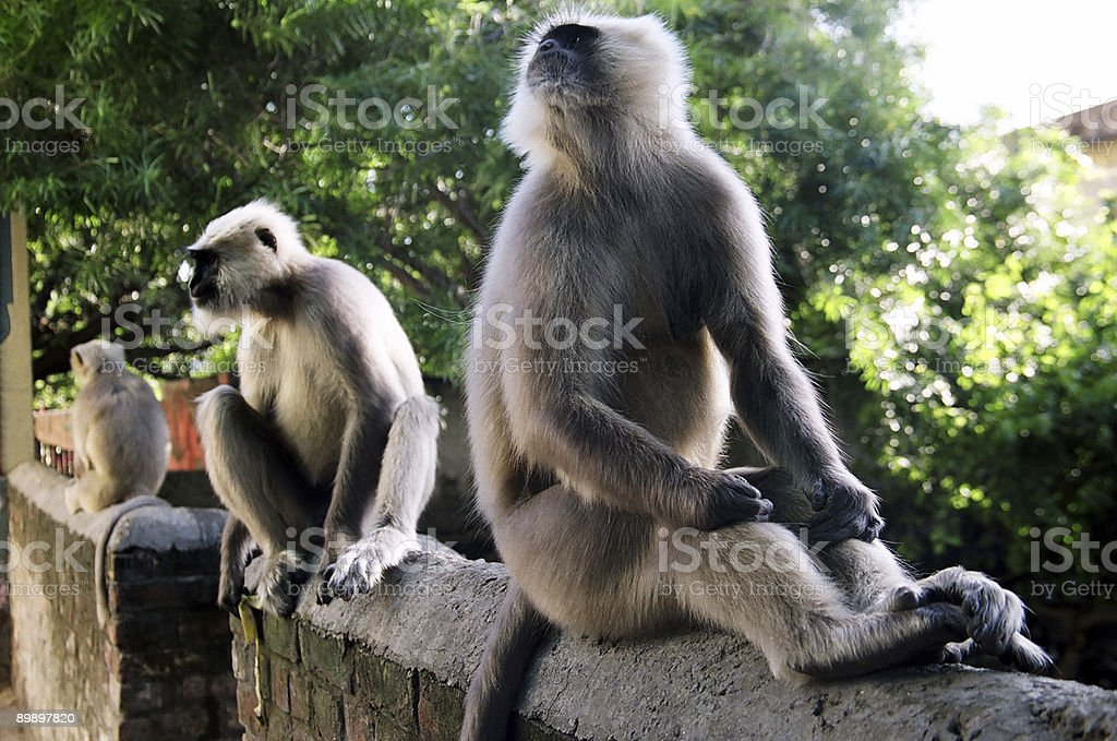 Three Monkeys Sitting on a Railing royalty free stockfoto
