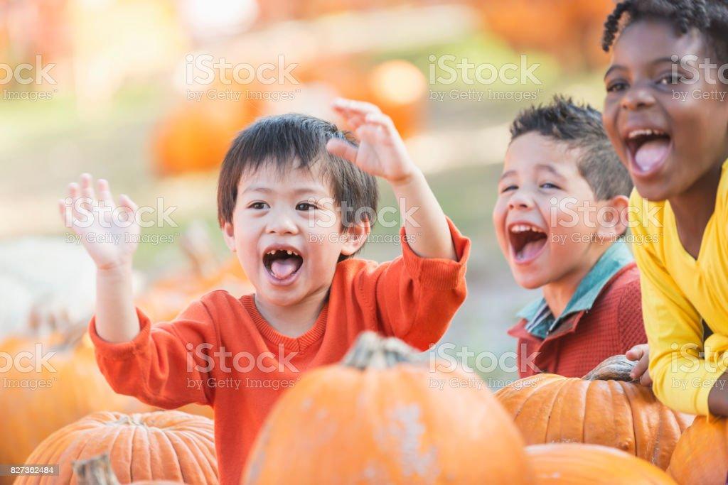 Three multi-ethnic boys in pumpkin patch stock photo