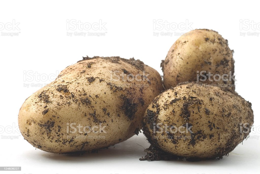 Three New Potatoes royalty-free stock photo