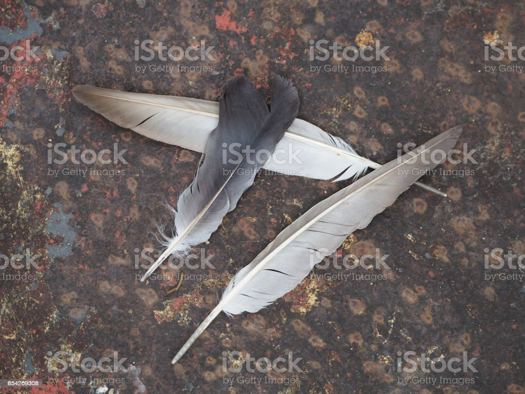 Three of feather on the ground. stock photo