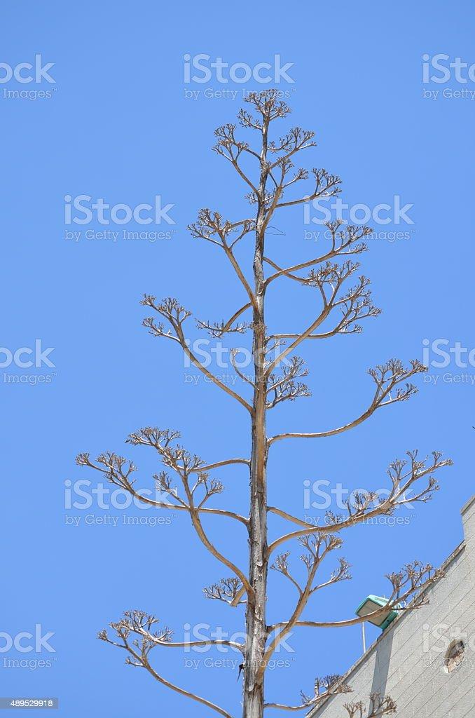 Three of life, genealogical tree: metaphor stock photo
