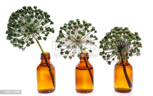 Three onion flowers in bottles on a white background. Isolated objects