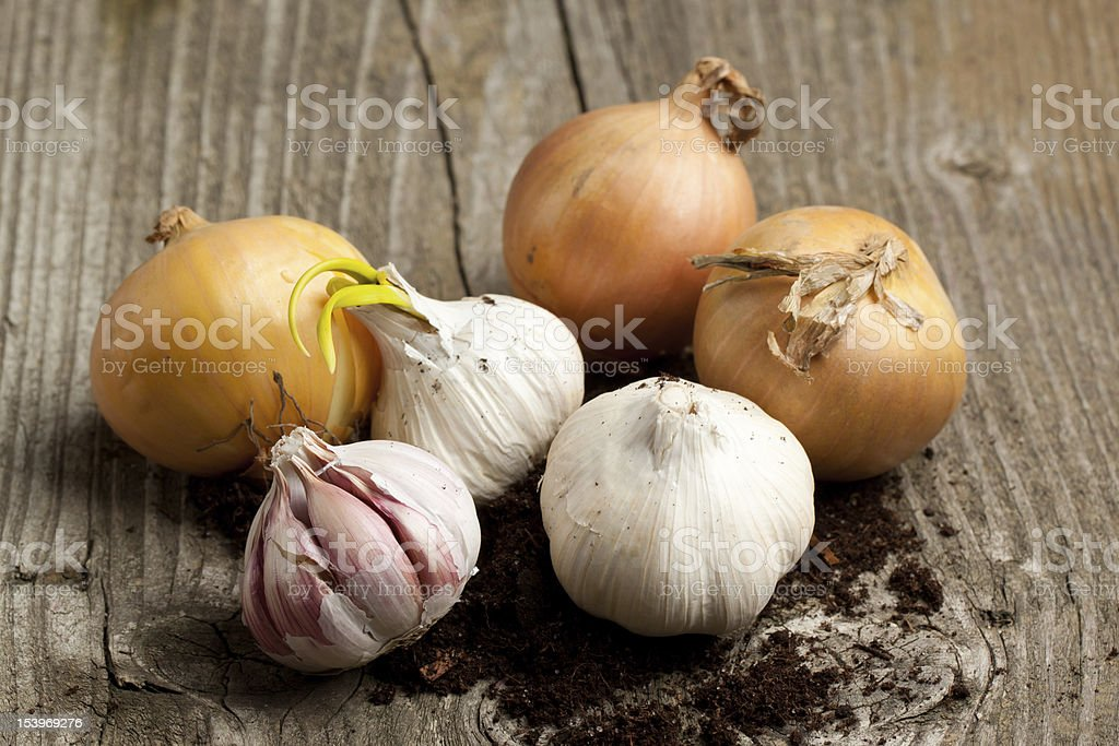 Three onion heads and three heads of garlic stock photo