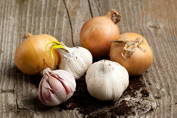 three onion heads and three heads of garlic - garlic stock photos and pictures