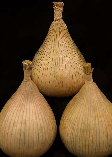 Three Onions stock photo