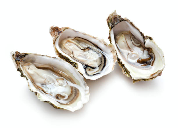 three opened oysters set of three fresh opened oysters isolated on white background mollusk stock pictures, royalty-free photos & images