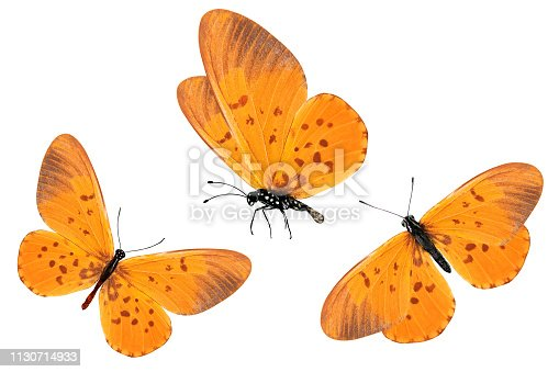 Three orange butterflies with red spots on the wings. Isolated on white background.