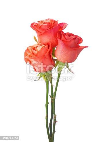 Three orange roses isolated on white background.