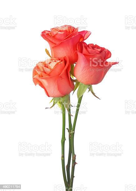 Three orange roses picture id490211754?b=1&k=6&m=490211754&s=612x612&h=r40ziijsphudh9ik7v rhd9a5cff3shwrhpjky0orno=