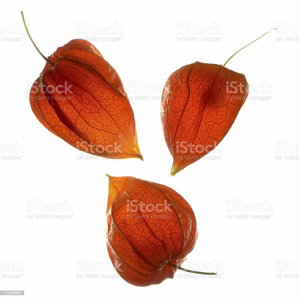 Three Orange Seed Pods stock photo