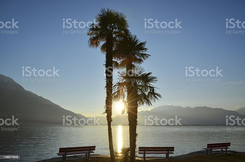 Three Palms and Bench at Sunset stock photo