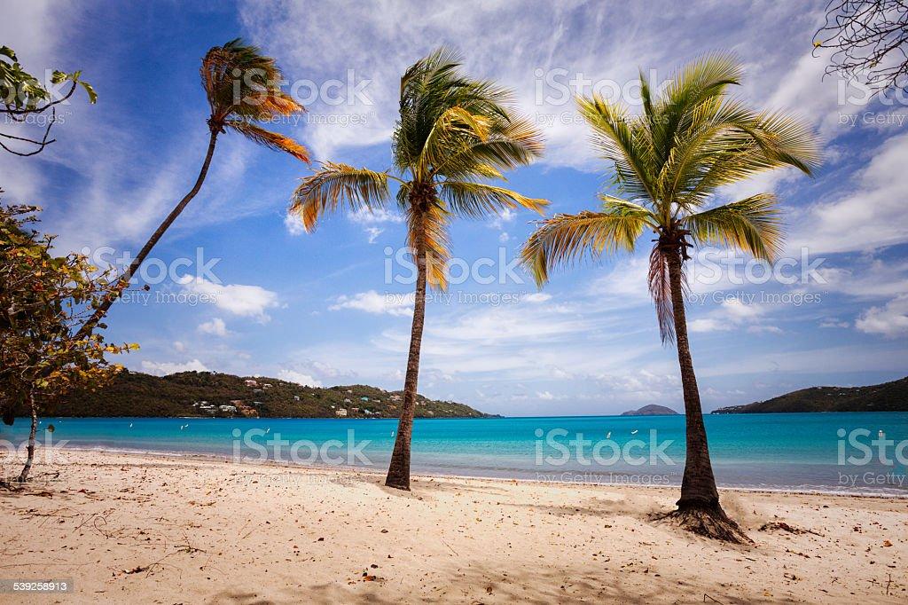 Three Palms on a Beach stock photo