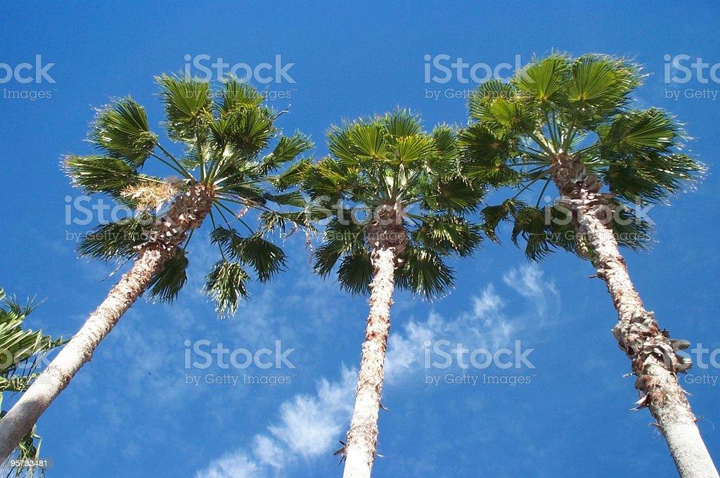 Three Palms royalty-free stock photo