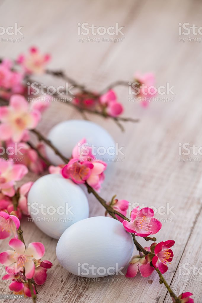 Three pastell blue Easter Eggs and Cherry Blossom Branches stock photo