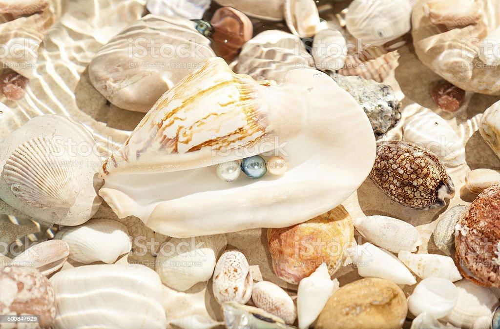 three pearls in big seashell underwater stock photo