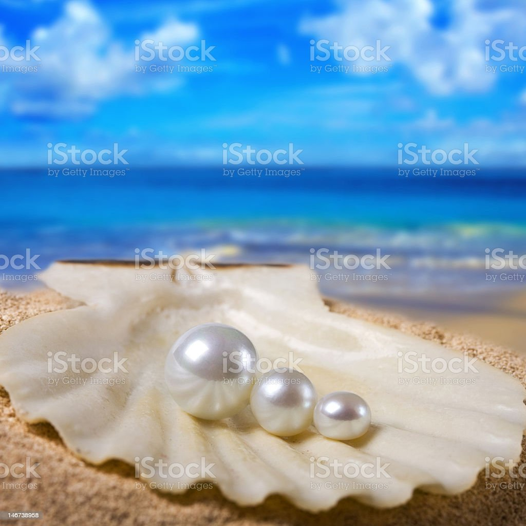three pearls in shell royalty-free stock photo