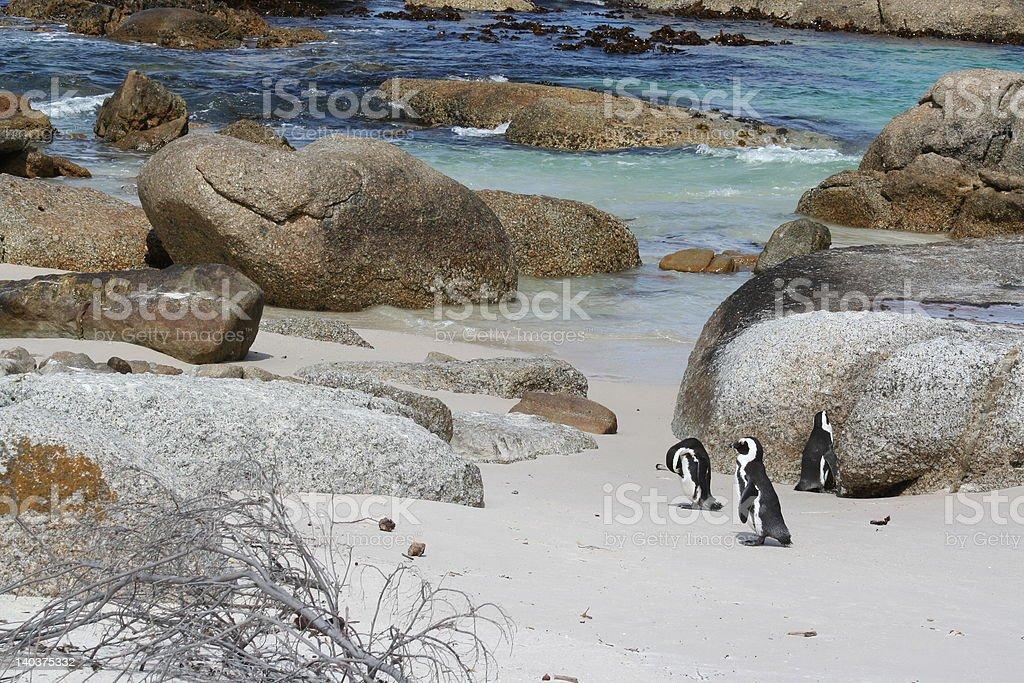 Three Penguins on the Beach royalty-free stock photo