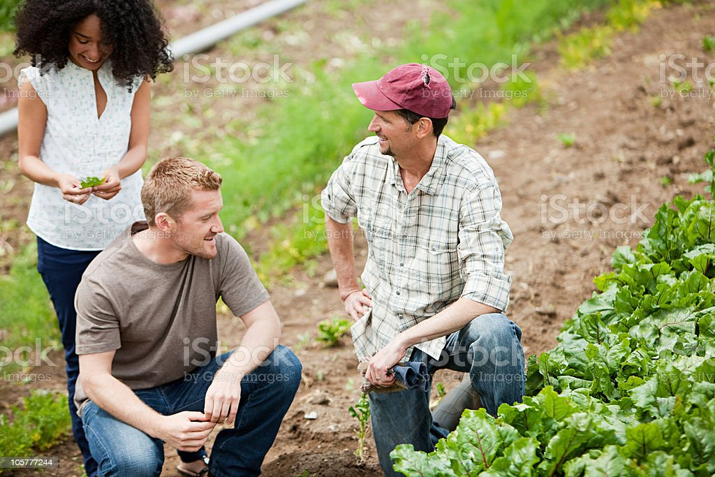 Three people looking at vegetable crop on farm royalty-free stock photo
