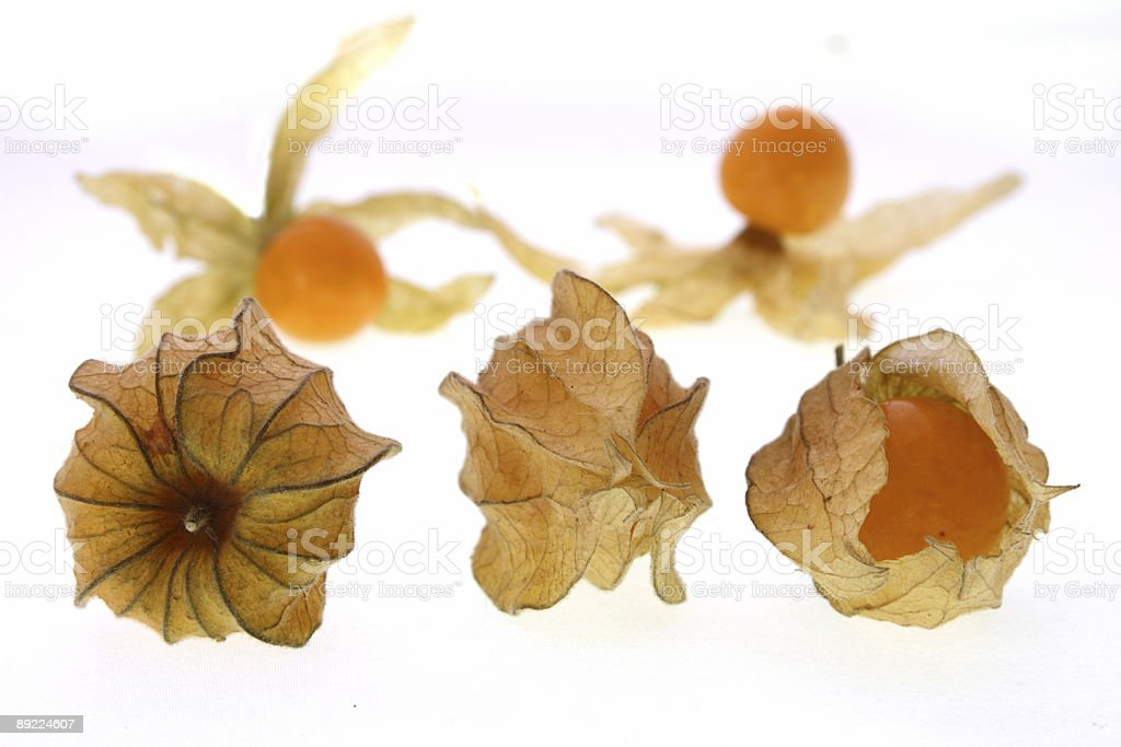 three physalis berryes royalty-free stock photo