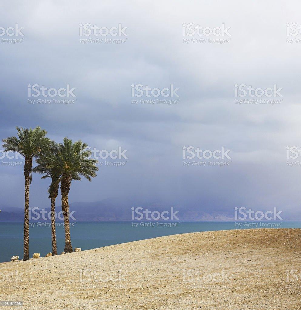 Tre pittoresco palme sulla spiaggia del Mar Morto foto stock royalty-free