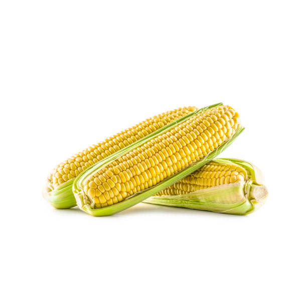 Three pieces of sweet corn isolated on white background. Three pieces of sweet corn isolated on white background. sweetcorn stock pictures, royalty-free photos & images