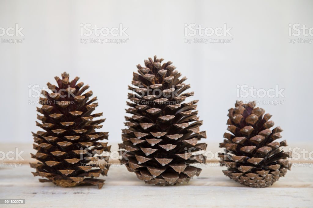 Three pine cones in a row royalty-free stock photo