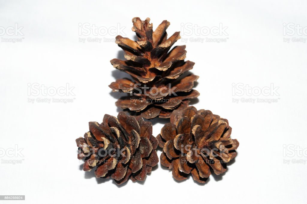 Three pine cones isolated on a white background royalty-free stock photo