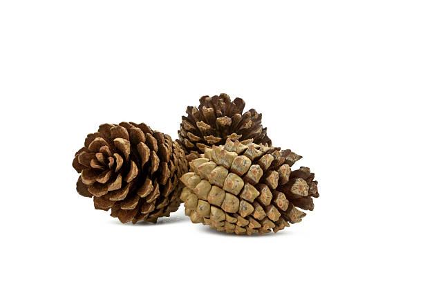 Tres conos de pino - foto de stock