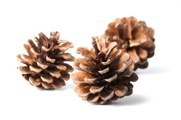 Three pine cones isolated on white - foto de stock