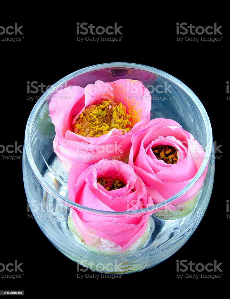three pink camellia blossoms stock photo