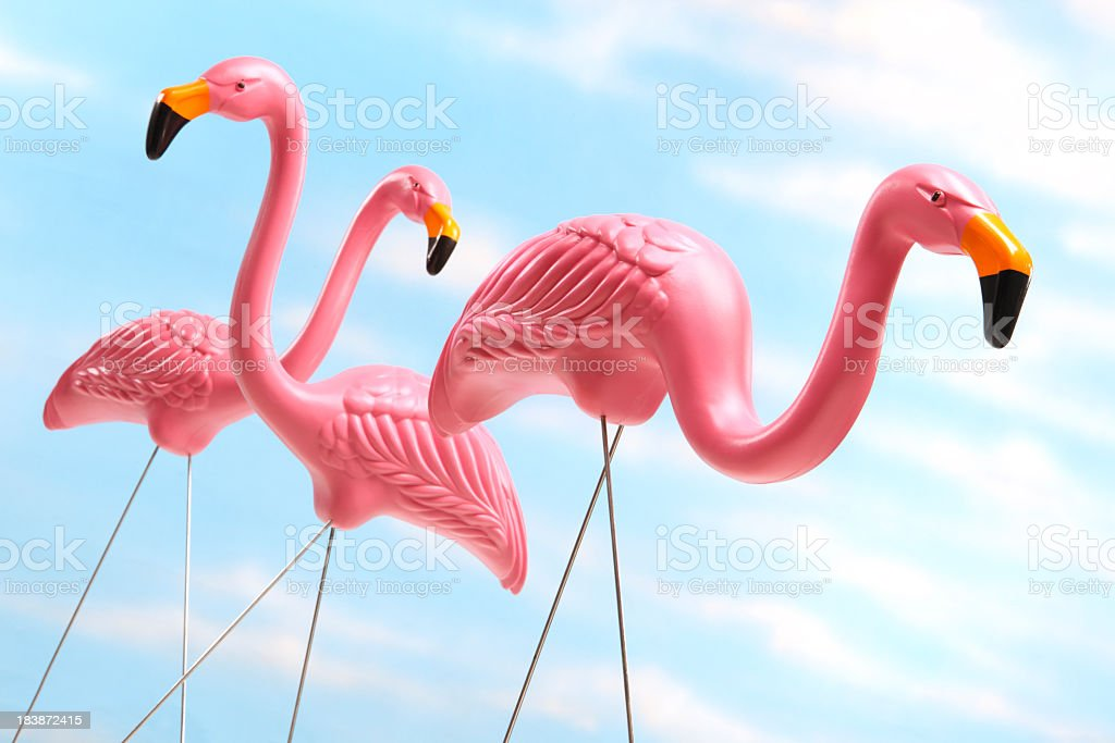 Three pink plastic lawn flamingos against blue sky background stock photo