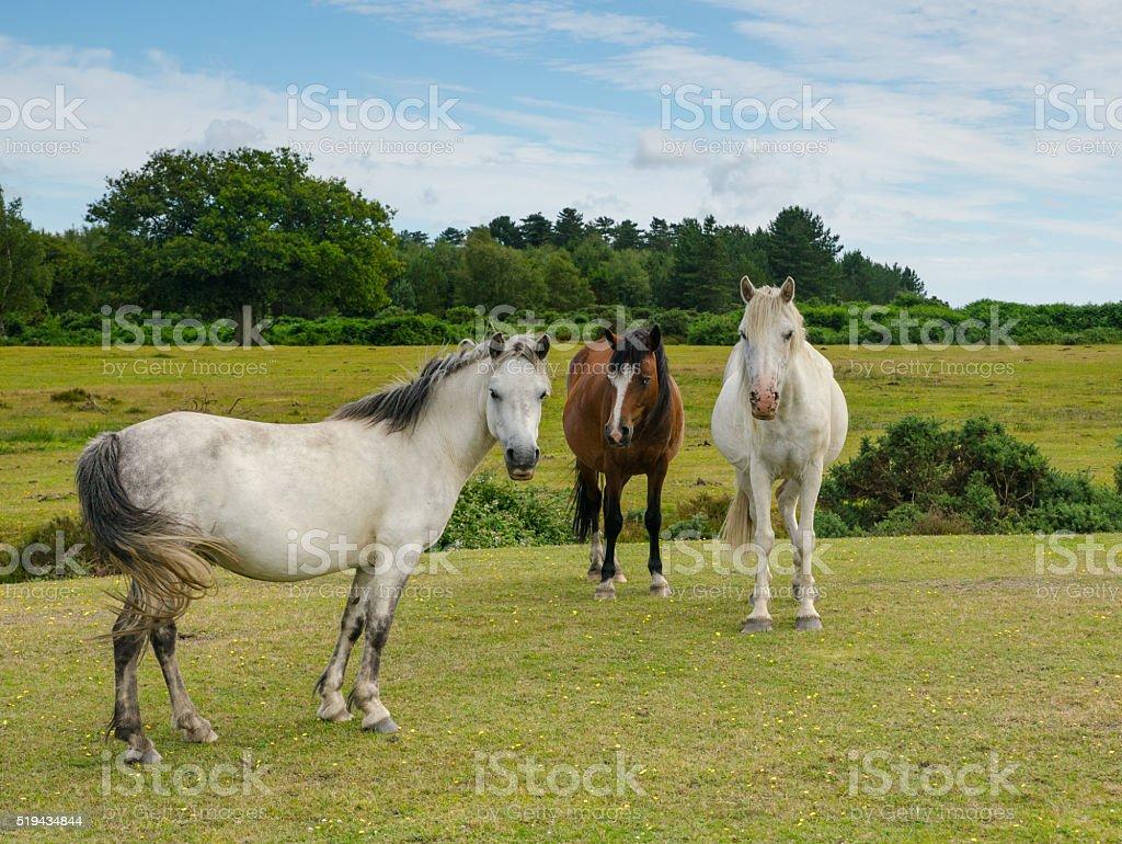 Three Ponies stock photo