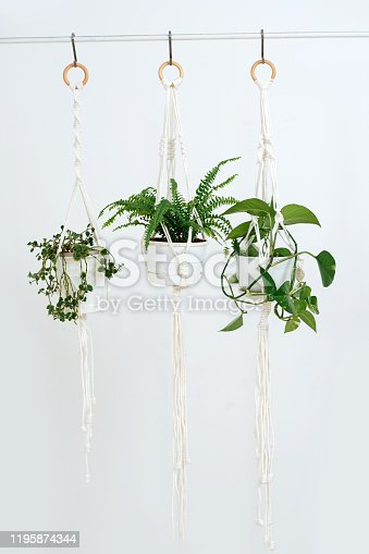 Three potted plans handing on a macrame pot holders in front of a while wall in a bright room.