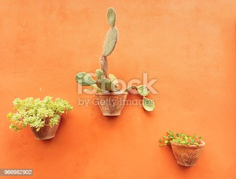 three potted plants hanging on an orange wall