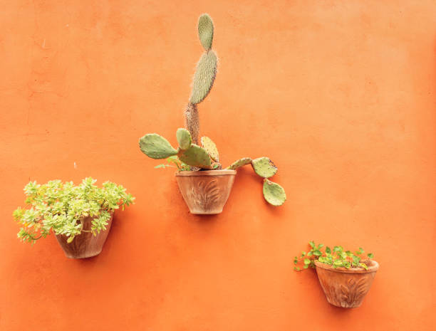 three potted plants hanging on an orange wall stock photo