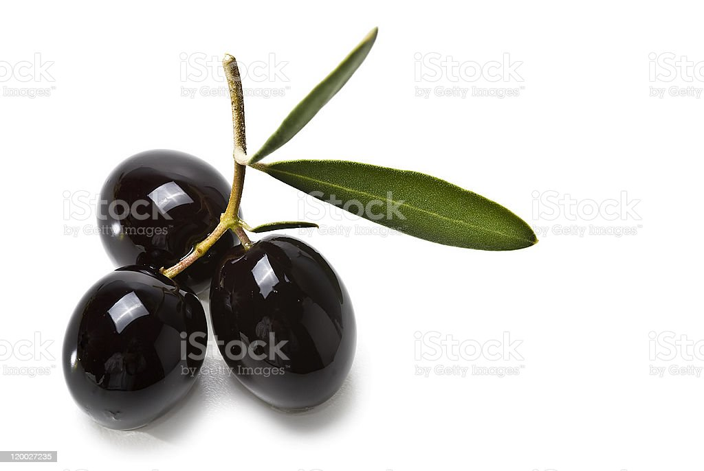 Three premium black olives on a branch stock photo