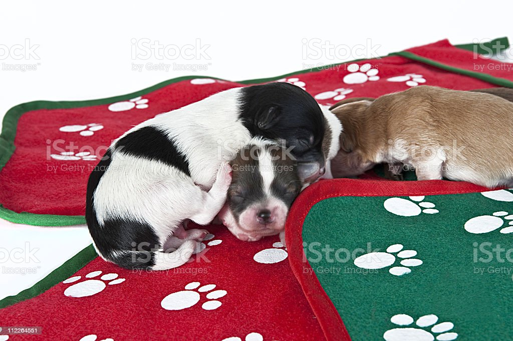 three puppies asleep on a Christmas themed mat royalty-free stock photo