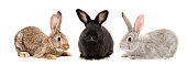 Three rabbits together isolated on white background