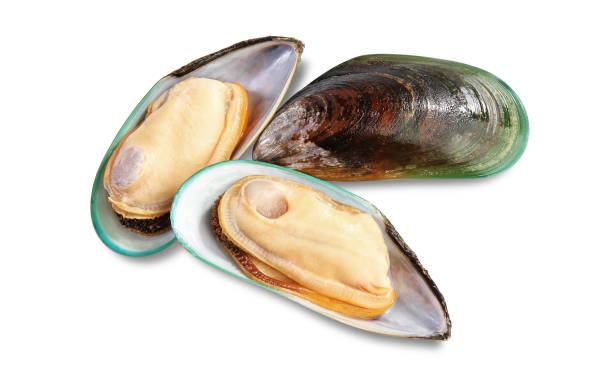 Three raw New Zealand mussels Three raw New Zealand mussels on shell isolated on white background mussel stock pictures, royalty-free photos & images