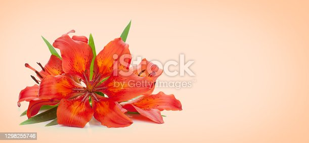 Three red lily over orange background. Spring flowers card with copy space