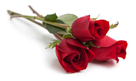 Red rose XXL