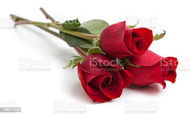 Three red rose stems picture id185011238?b=1&k=6&m=185011238&s=612x612&h=q5bdzlcduot9jqjpfczwuobbrxrcoigwnlgclson2sa=