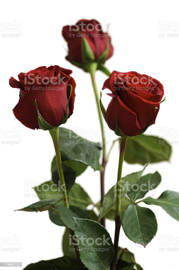 three red roses for mother's day royalty-free stock photo