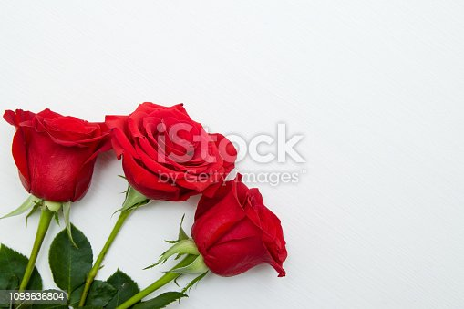 Three Red Roses on white wooden Background. copy space - Valentines and 8 March Mother Women's Day concept