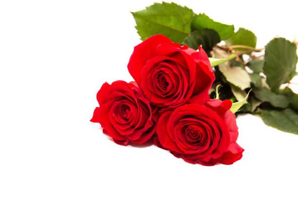 Three red roses picture id1200758337?b=1&k=6&m=1200758337&s=612x612&w=0&h=lweyyx5mf0nr7iafpwtac 54jmnj7rqebwuifubliu0=