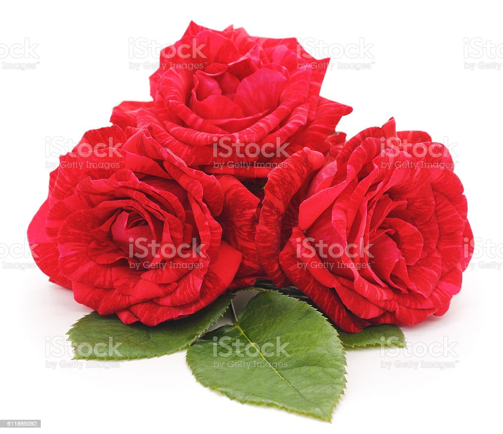 Three red roses. stock photo