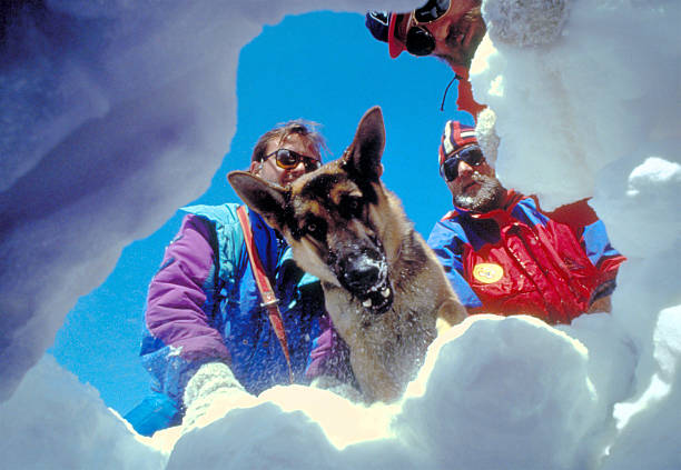 Three rescuers with dog in the snow, mountains in winter stock photo
